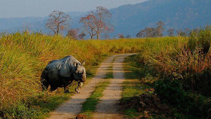 Kaziranga-National-Park-in-Guwahati-Satish-Krishnamurthy-wikimedia