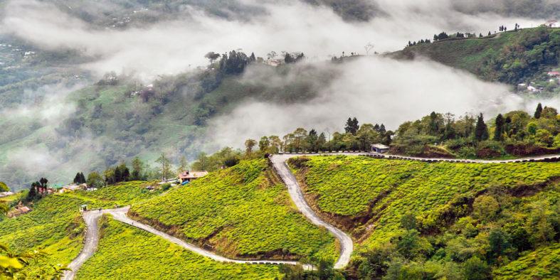 TravelFree.in_Darjeeling_ntvqsq