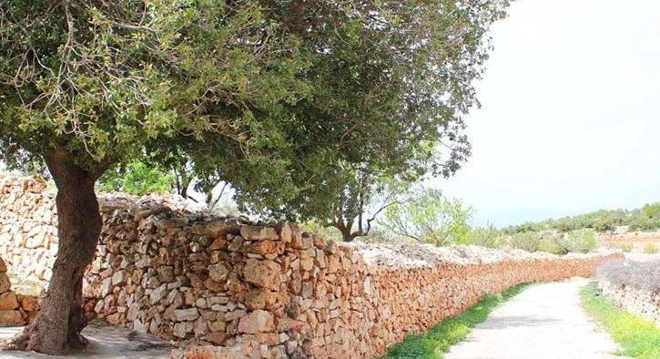 1-Ajloun-Castle-to-Khirbet-Alsouq1